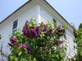 photo of Lilacs at Stonewall Farm Bed and Breakfast