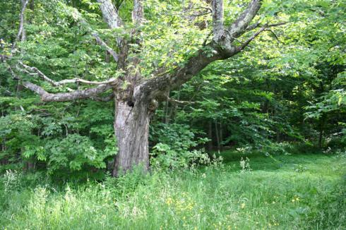 photo of an old tree